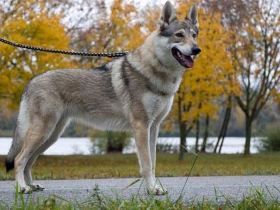 Athena Blondie Canis